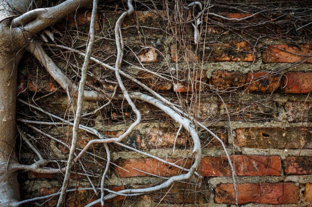 weatherford-foundation-repair-root-barrier-2_2